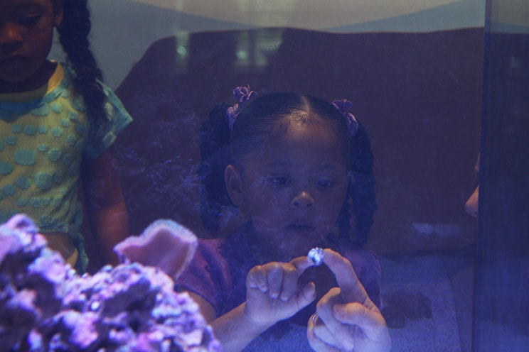 Girl looking at aquarium in Discovery Room.