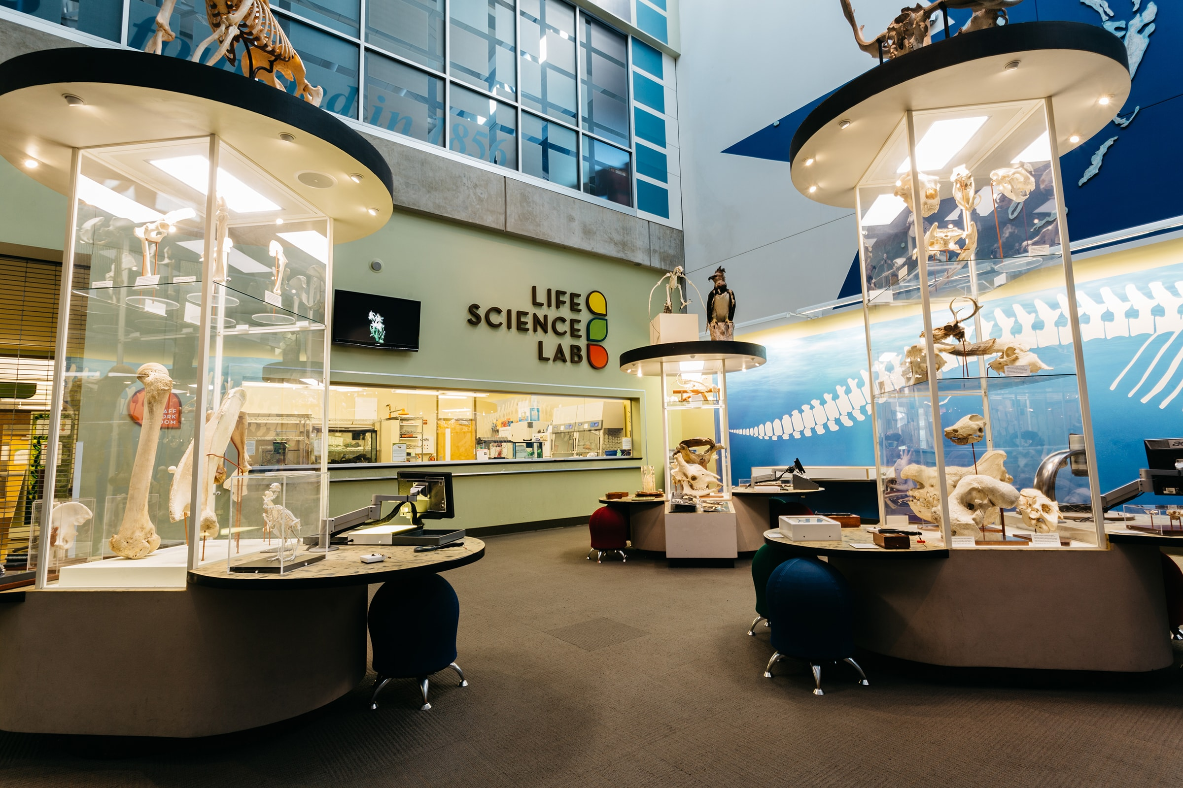Life Science Exhibit