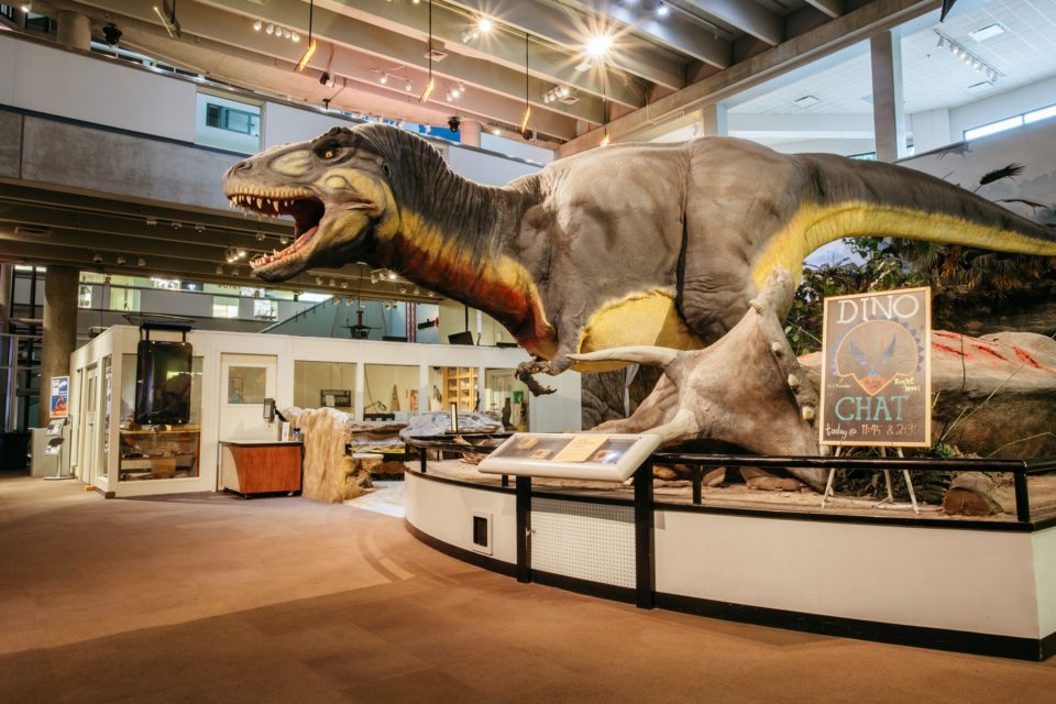 Ecology & Environment Dinosaur Scene