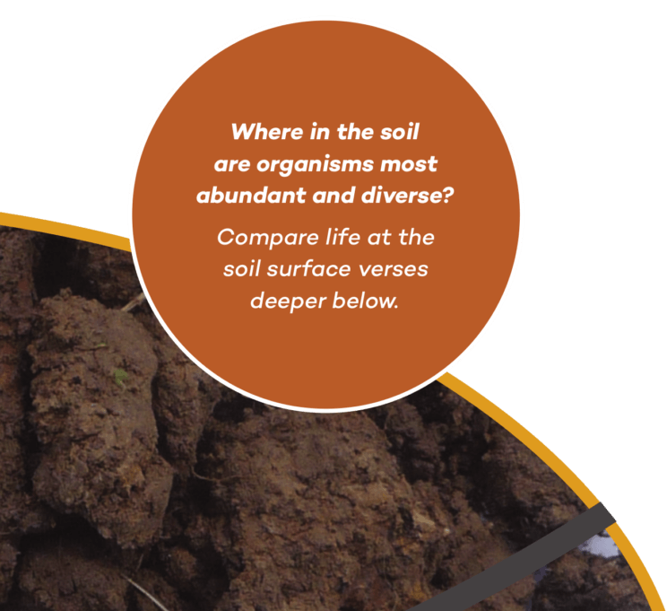 Where in the soil are organisms most abundant and diverse? Compare life at the soil surface verses deeper below.