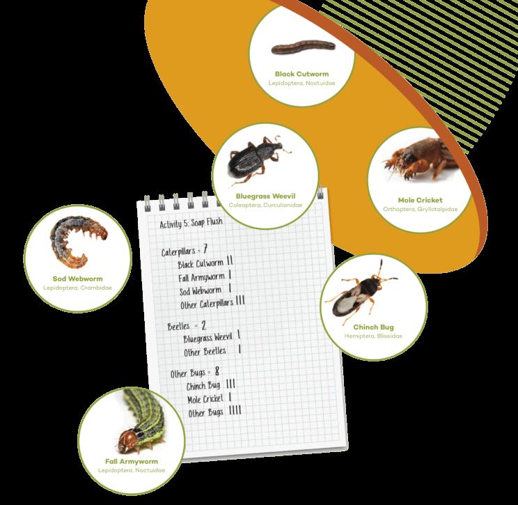 Sod Webworm, Bluegrass Weevil, Mole Cricket, Chinch Bug, Fall Armyworm