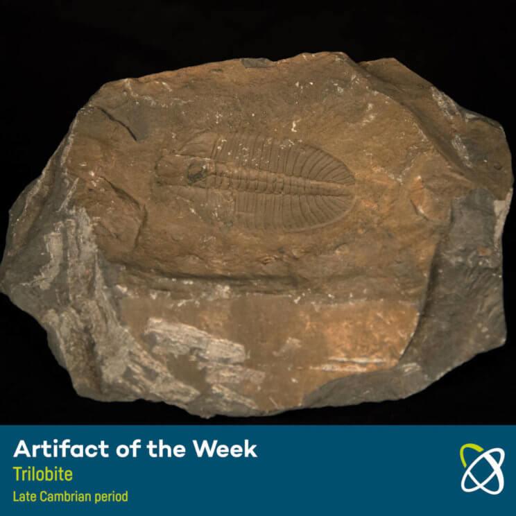 Trilobite Late Cambrian period
