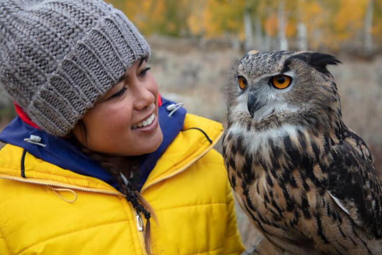 Ariel Owl
